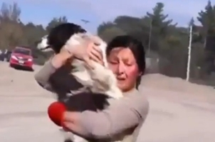 Woman finds her dog after Volcanic eruptions in chile's calbuco