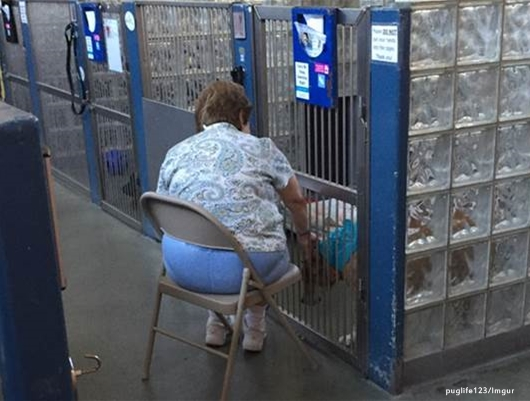 Meet Sandy Barbabella, the woman who soothes shelter dogs by reading to them