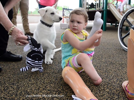 Sapphyre Johnson, 3, who has two prosthetic feet, meets her new dog, Lt. Dan at Shriner's Hospital for Children on Monday. Lt. Dan was born missing one of his front paws